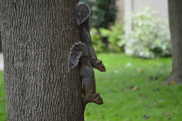 squirrels two.