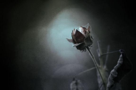 dying flower.