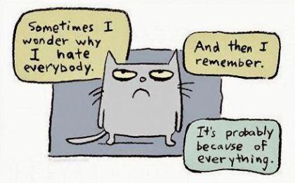 cynical cat.
