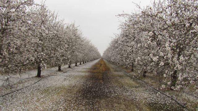 flower-tree-petals-path