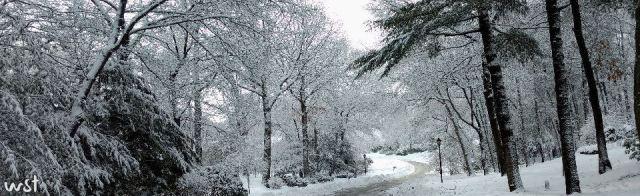 sig-crop-0216-snow-3-header