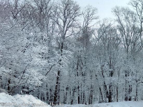 sig-rs-0216-snow-1