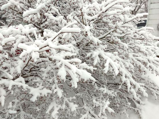 sig-rs-0216-snow-17